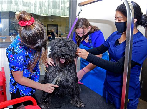 students brush dog's coat