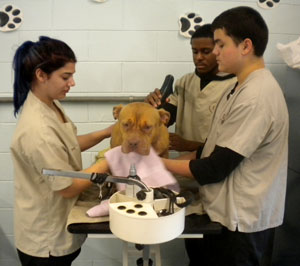 Canine Careers Students Work with 'Paws of War'