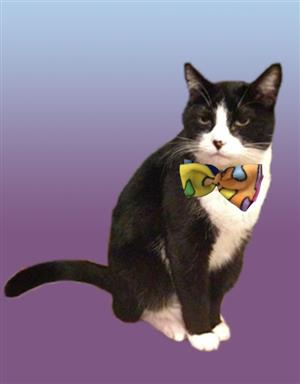 cat with bow tie on collar